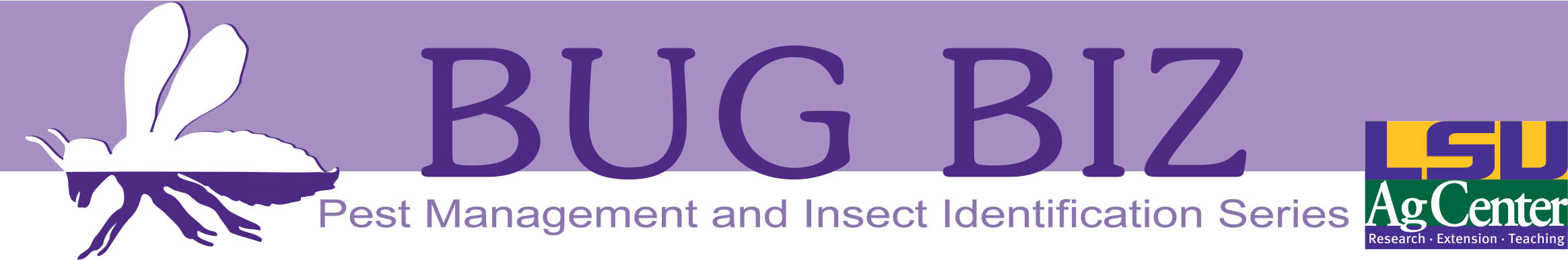 BugBiz header purplejpg