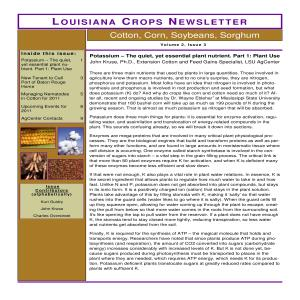 LouisianaCropsNewsletterVol2Issue3March26 thumbnail