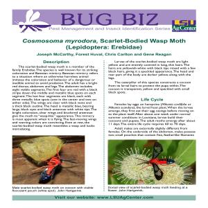 3740 Scarlet Bodied Wasp Mothpdf thumbnail
