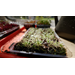 Get It Growing: Microgreens are easy way to grow vegetables