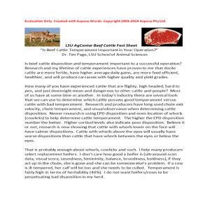 Is Beef Cattle Temperament Important in Your Operation?