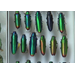 Researchers study role of color in jewel beetles