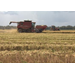 Rice harvest underway in southwest Louisiana