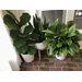 Houseplants have loads to offer for minimal inputs