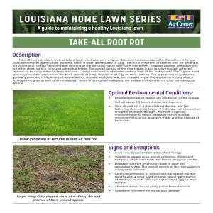 Louisiana Home Lawn Series: Take-all Root Rot
