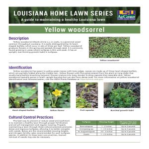 Louisiana Home Lawn Series: Yellow woodsorrel