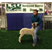 Red River Parish participate in 2013 Northwest District Livestock Show