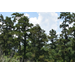Ark-La-Tex forestry forum set for March 10