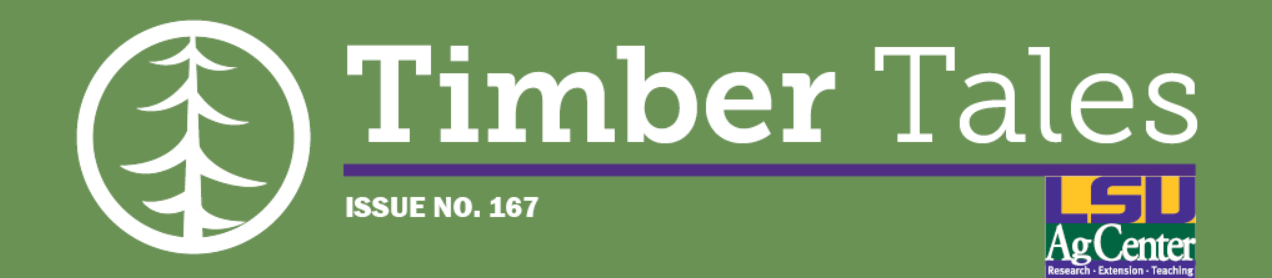 Timber Tales Issue No. 167 decorative header.