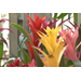 Low-maintenance bromeliad provides long-lasting color
