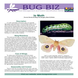Bug Biz: Pest Management and Insect Identification Series - Io Moth