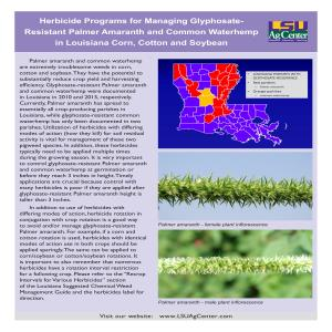 Herbicide Programs for Managing Glyphosate-Resistant Palmer Amaranth and Common Waterhemp in Louisiana Corn, Cotton and Soybean