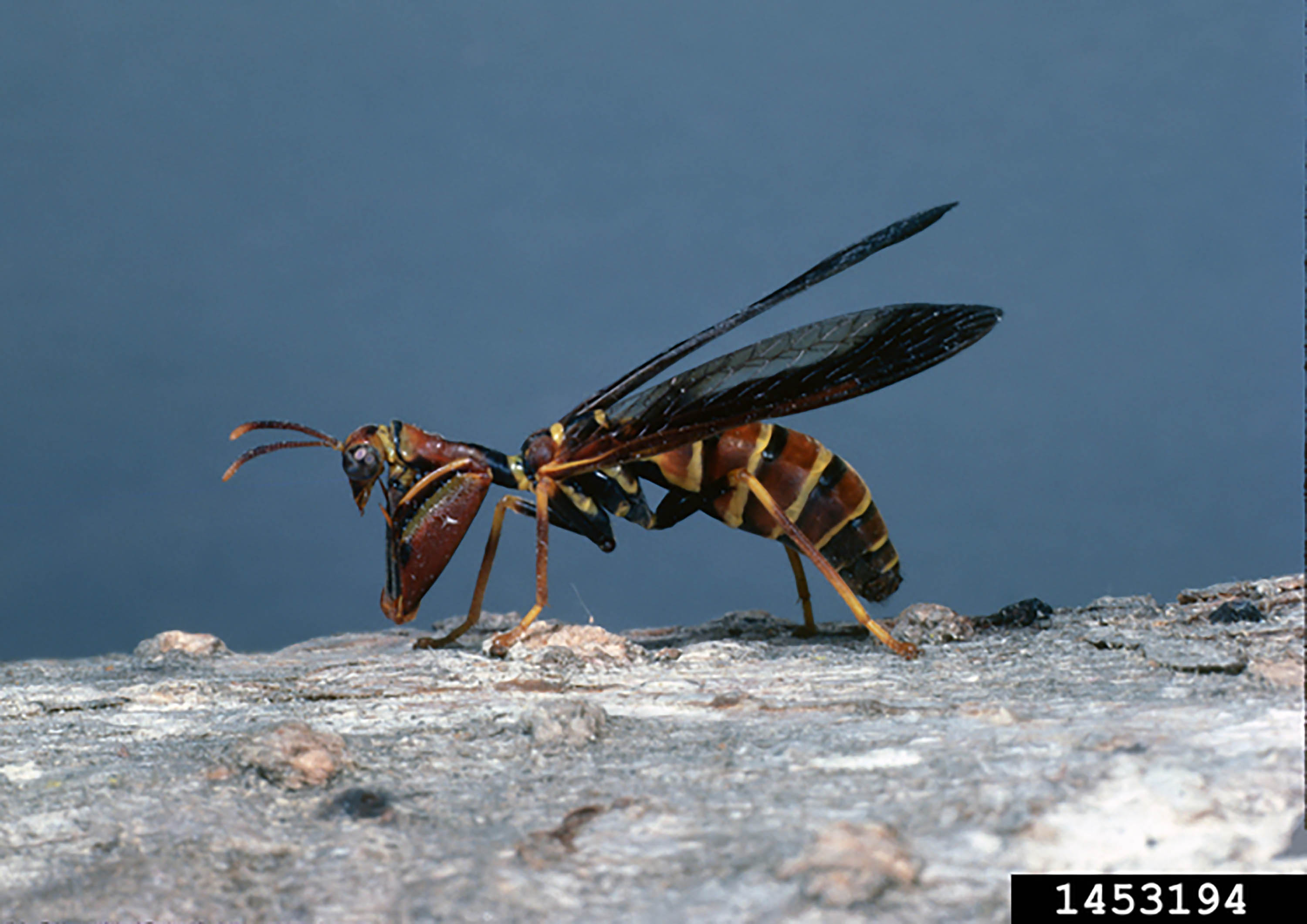 Side view of a wasp on a stick.
