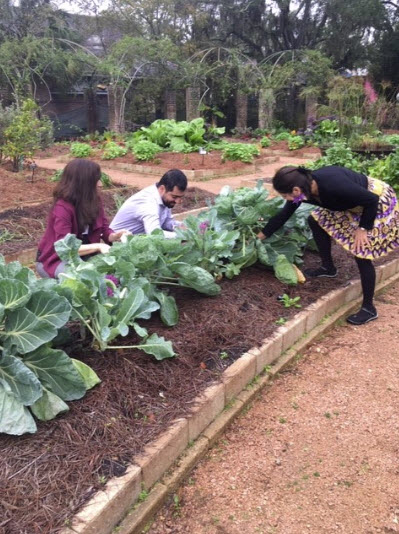 People looking at cabbage in raised garden bedjpg