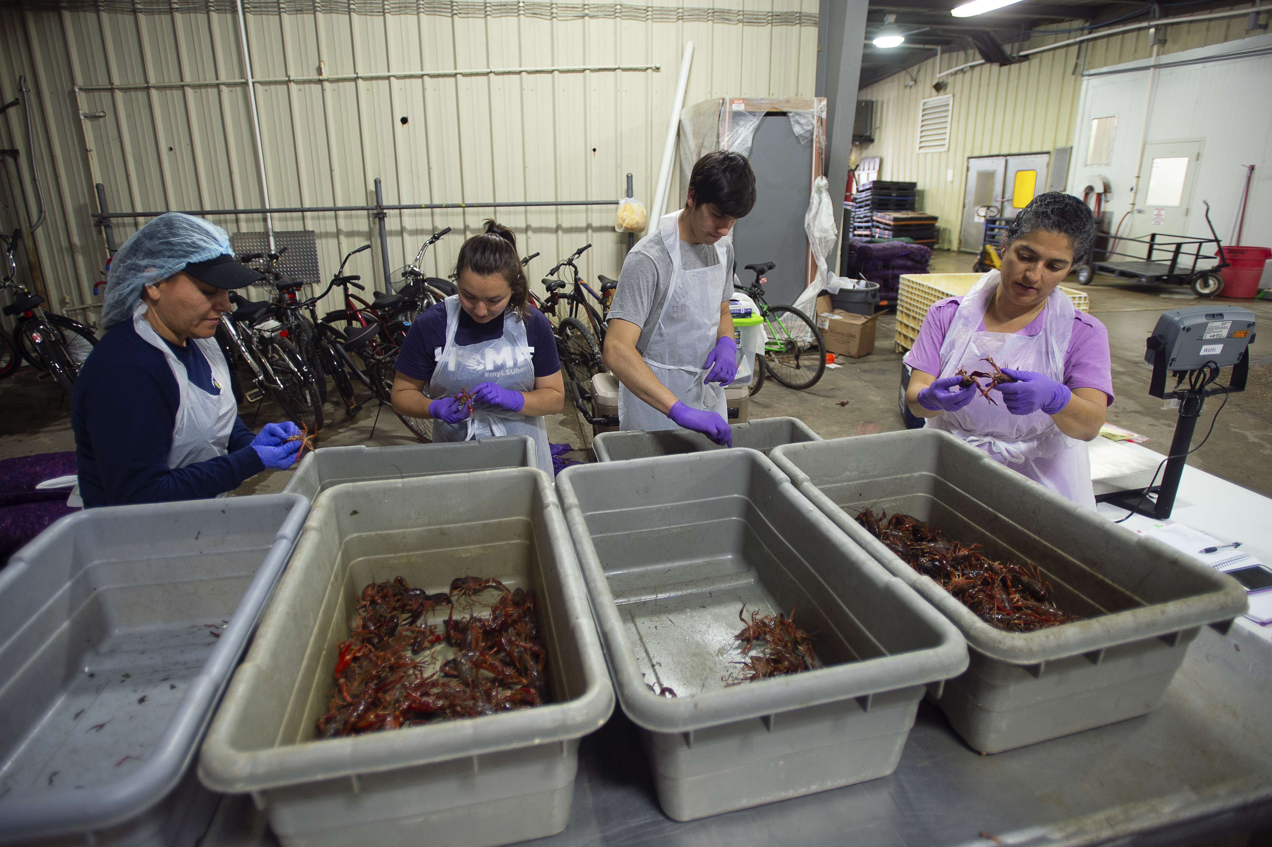People looking at bins of crawfish