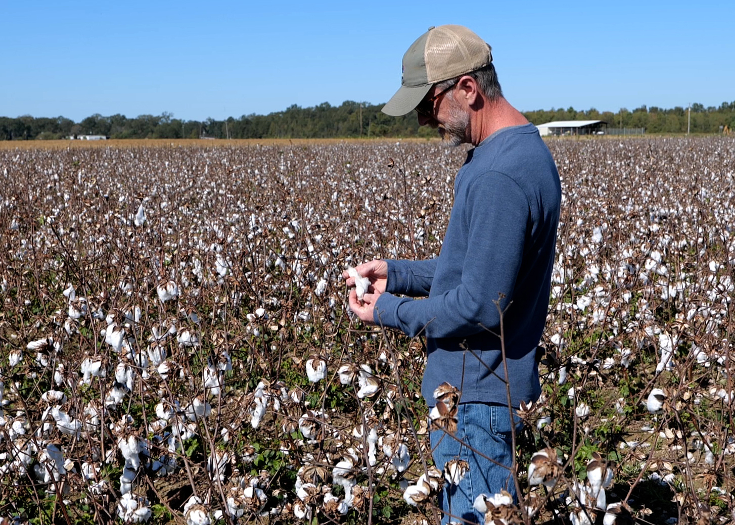 Trey price in a field of cotton.