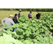 Beginning farmer training program begins Oct. 1 in Baton Rouge