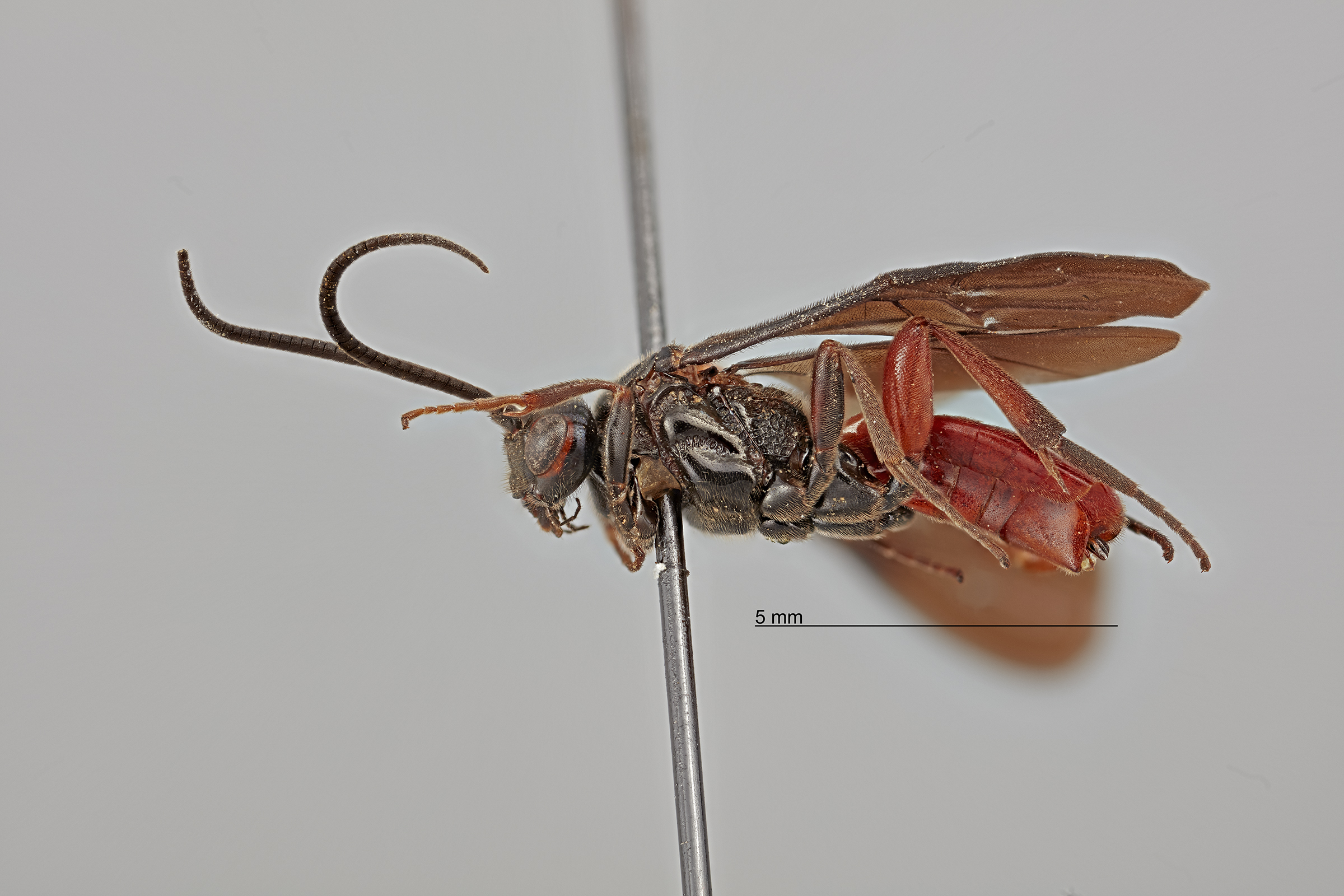 Side view of a wasp.