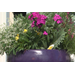 Use combination container plants for patios and porches