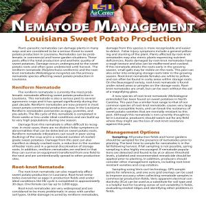 Nematode Management in Louisiana Sweet Potato Production