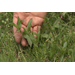 Now is the time to defend your lawn against weeds