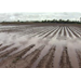 Cotton planting hurt by heavy rains