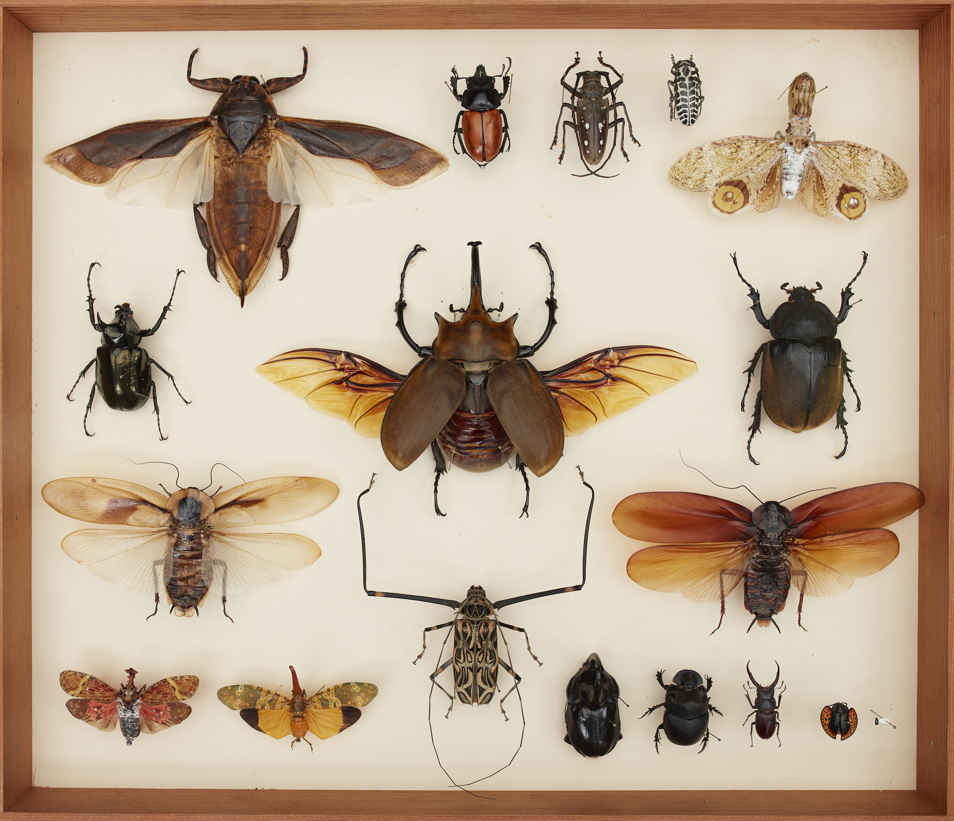 International insect collection.jpg thumbnail
