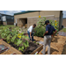 LSU AgCenter Greauxing Gardens Program Information and Videos