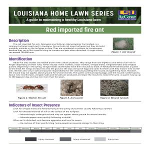 Louisiana Home Lawn Series: Red imported fire ant