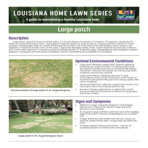 Louisiana Home Lawn Series: Large patch