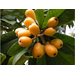 Don't overlook this ornamental tree with edible fruit