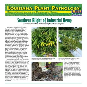 Southern Blight of Industrial Hemp