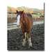 Environmental Horse Stables and Barns