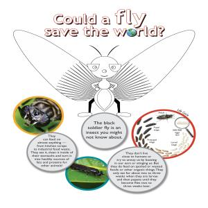 Could a Fly Save the World?