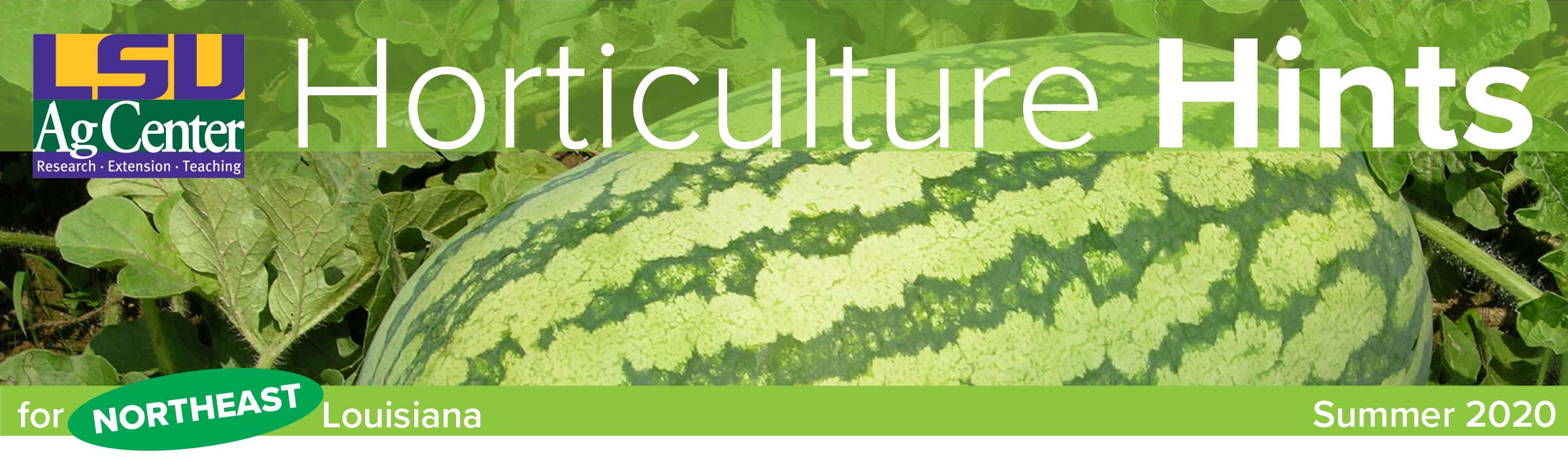 Banner for Horticulture Hints summer 2020.