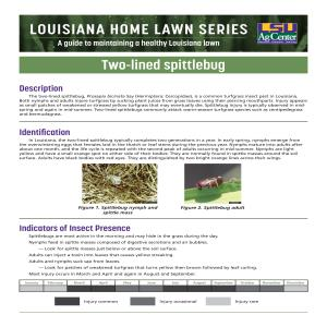 Louisiana Home Lawn Series: Two-lined spittlebug