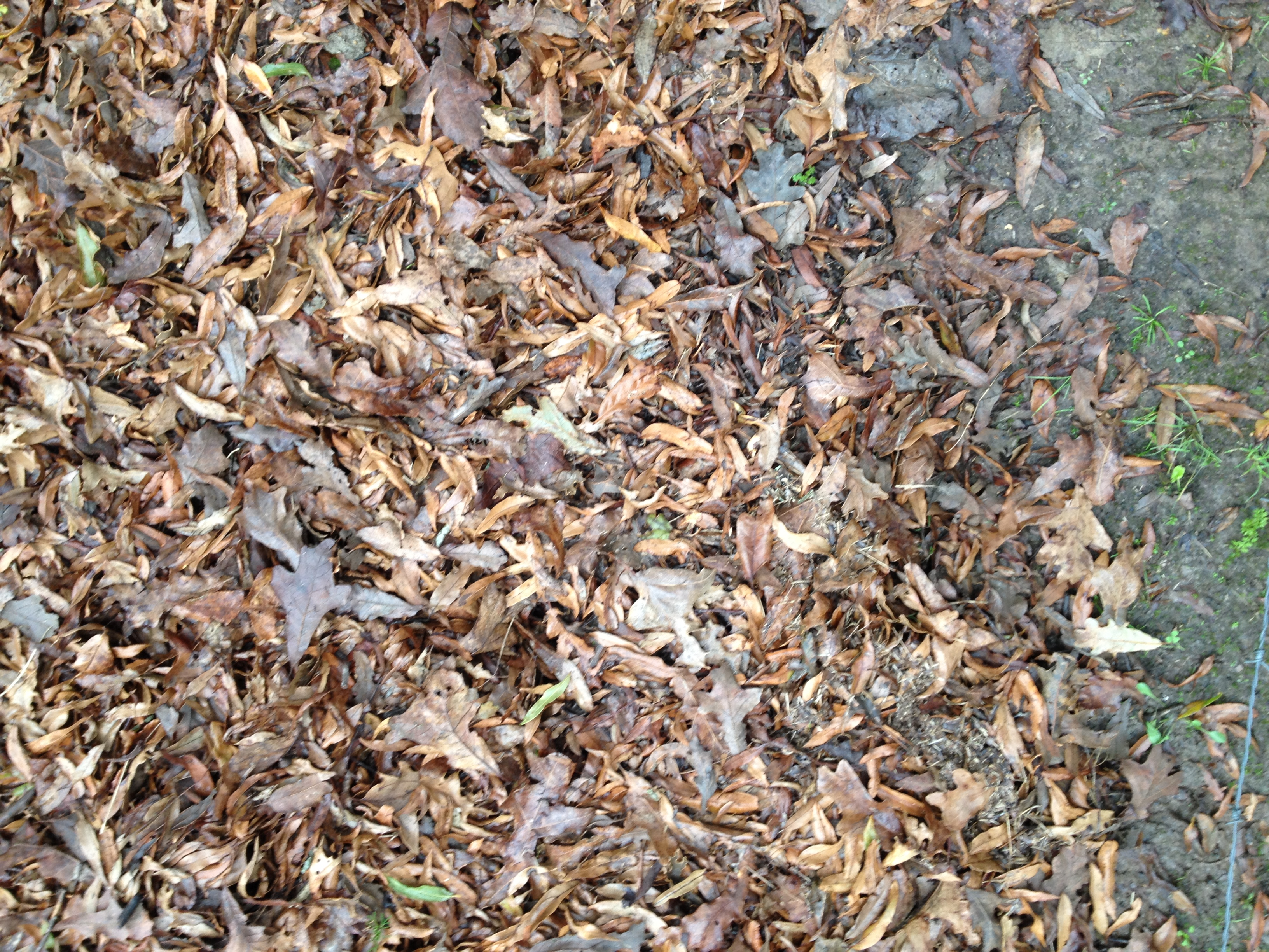 Leaves to be used for composting