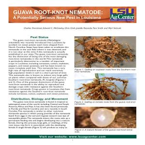 Guava Root-Knot Nematode: A Potentially Serious New Pest in Louisiana