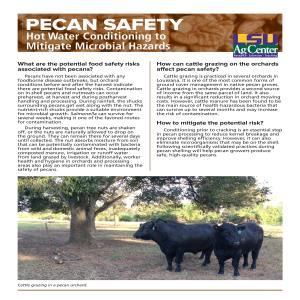 Pecan Safety: Hot Water Conditioning to Mitigate Microbial Hazards