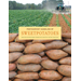 Postharvest Handling of Sweet Potatoes