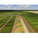 ​The Potential for the Use of Drones in Rice Production and Research