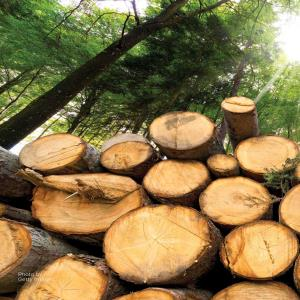 Timber Prices: Supply, Demand and Extenuating Circumstances