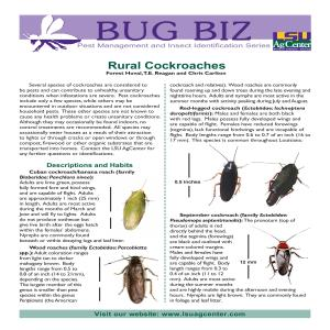Rural Cockroaches