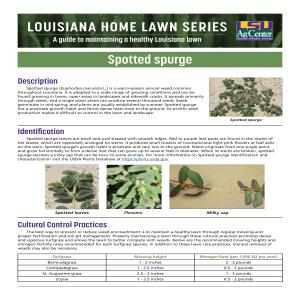 Louisiana Home Lawn Series: Spotted spurge