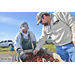 Crawfish farmers urged not to drain ponds yet despite drop in sales