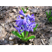 It's Time to Plant Spring Flowering Bulbs