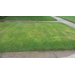 Lawn Discoloration