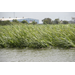 Louisiana sugarcane crop escapes extensive damage