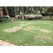 Large patch disease increasing in Louisiana lawns